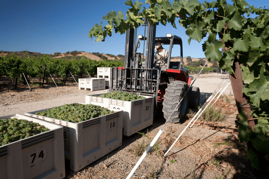 harvesting at one of the great wine regions of the americas