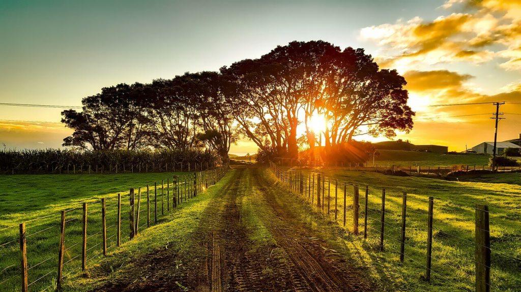 New Zealand wine region
