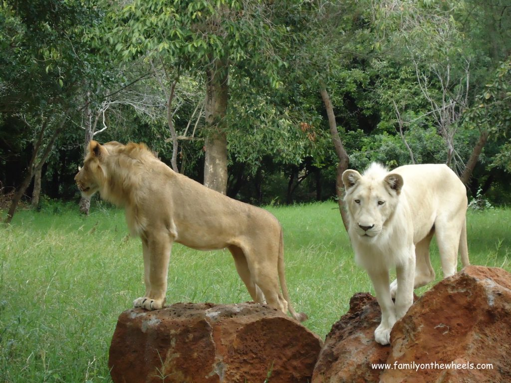 Best Places to See Wildlife - Mauritius, Lions