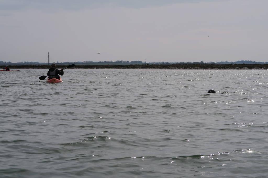 Wildlife in Europe: Kayaking with Seals