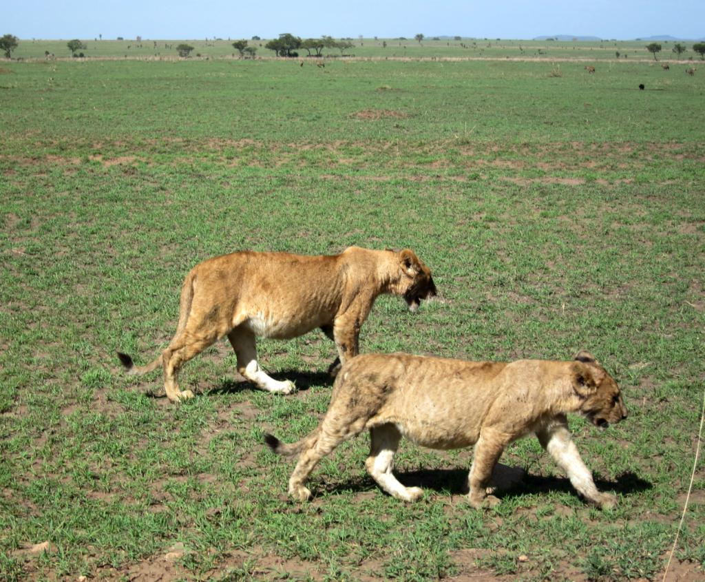 Wildlife Adventures in the Serengeti