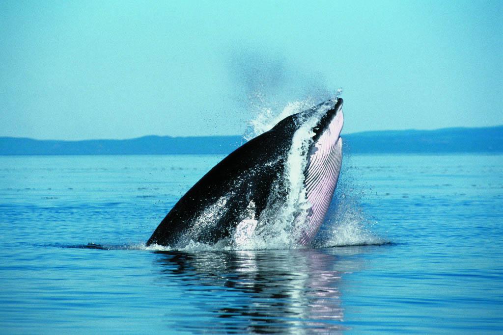 Wildlife Tourism: Wildlife in Europe