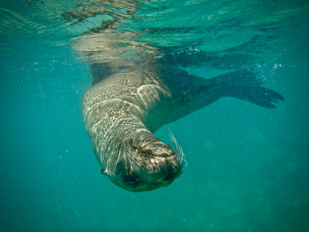 Wildlife Tourism Adventure with Seals in The Galapagos Islands