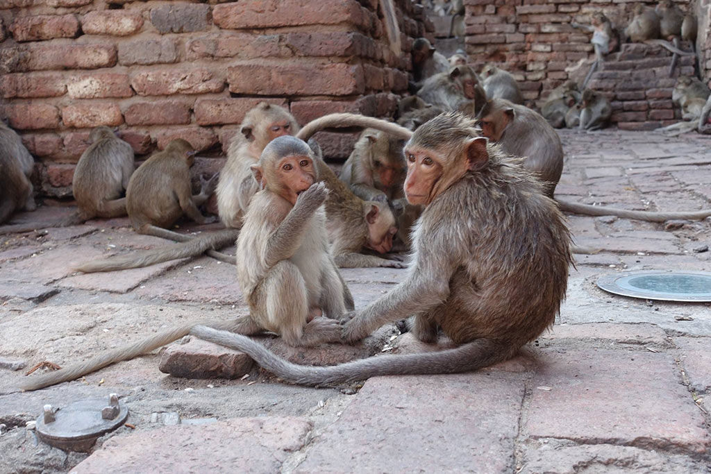 Best Places to See Wildlife - Thailand, Monkeys