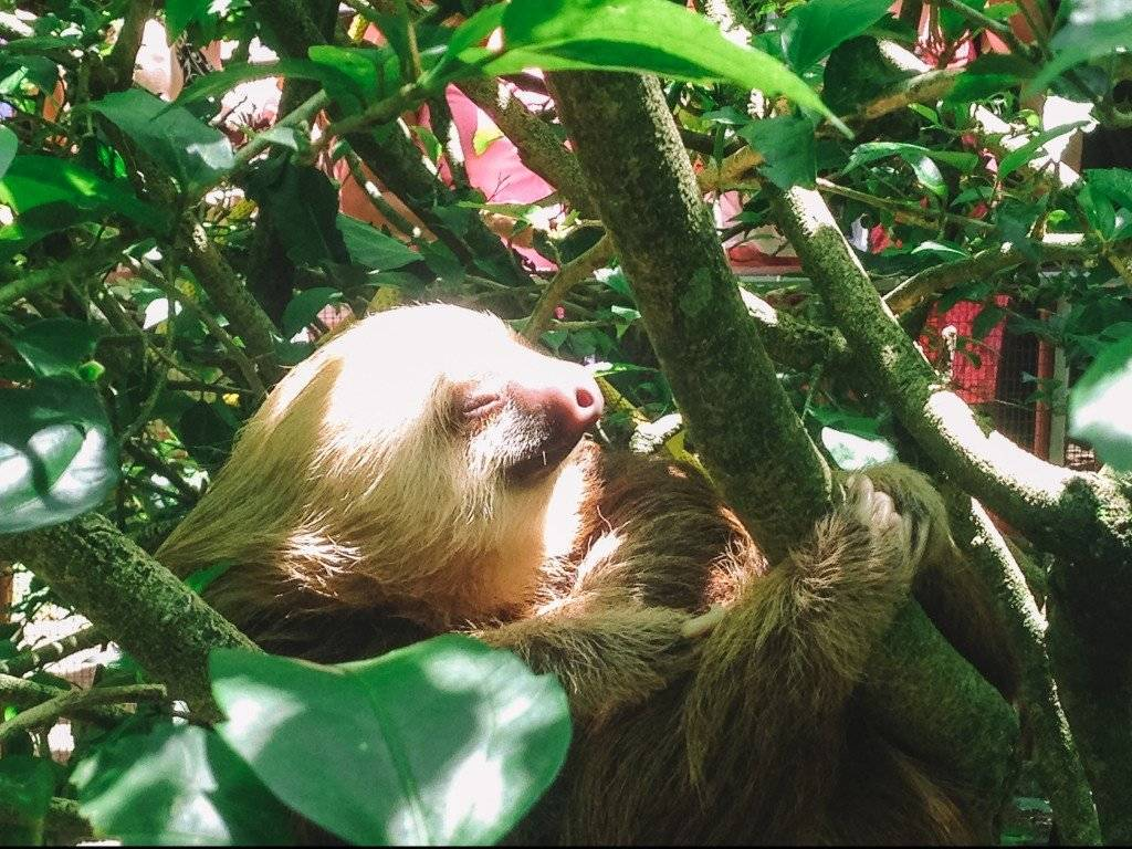 WIldlife Encounter with a Sloth in Costa Rica