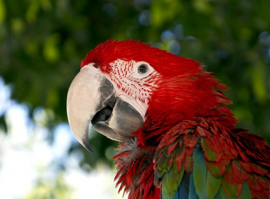 Macaw is one of the beautiful wildlife encounters