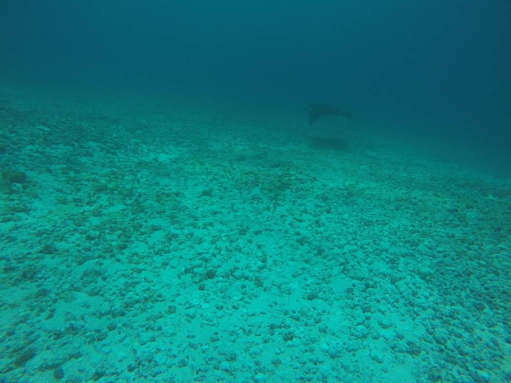 Best Places to See Wildlife - Indonesia, Sea Turtles