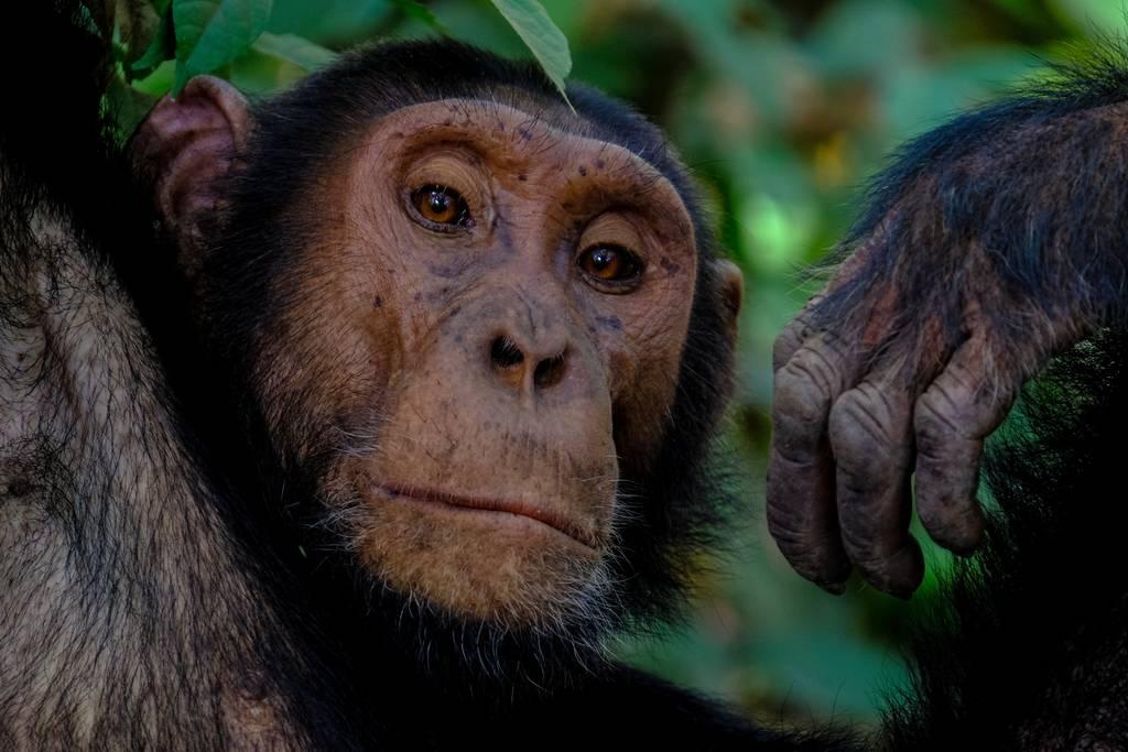 WIldlife Adventure in Uganda