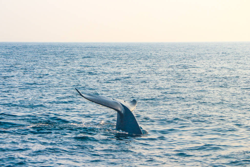 Best Places to See Wildlife - Sri Lanka