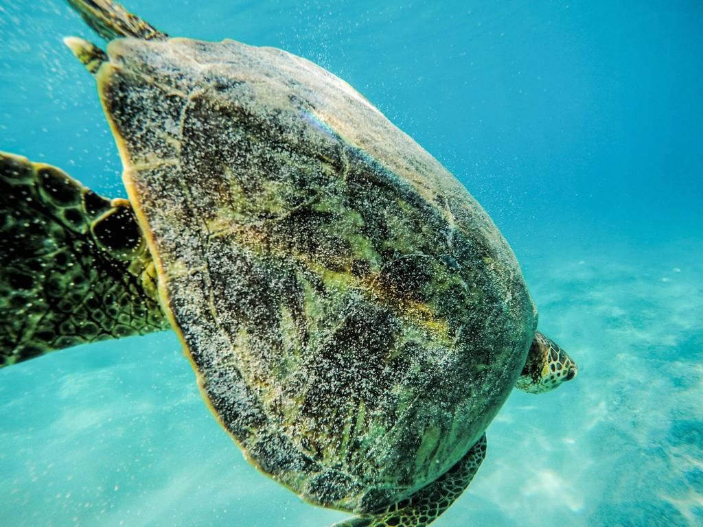 Best Places to See Wildlife - Maldives, Sea Turtles