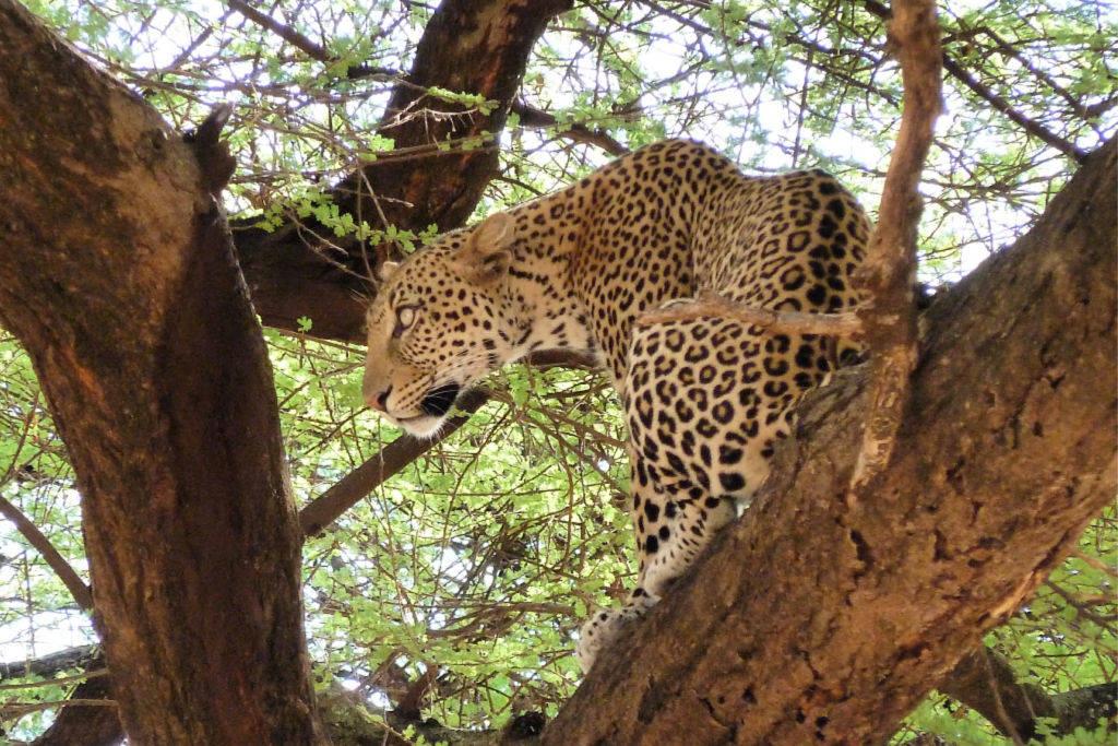 Wildlife Adventures in Kenya