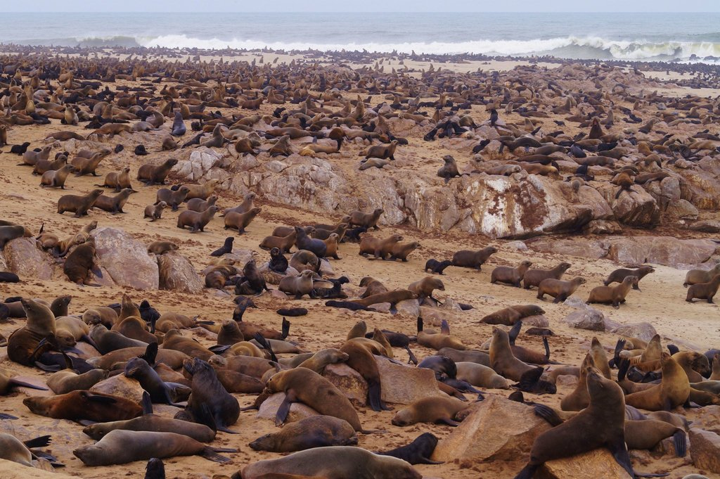 Wildlife Adventure with Seals in Namibia