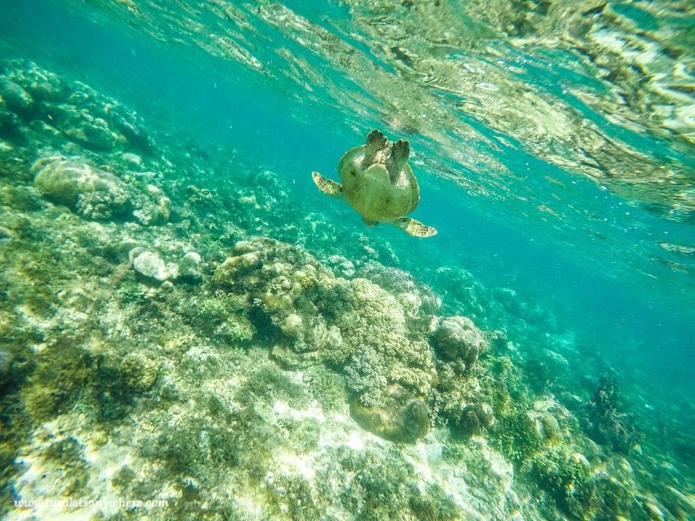 Best Places to See Wildlife - Philippines - Sea Turtles