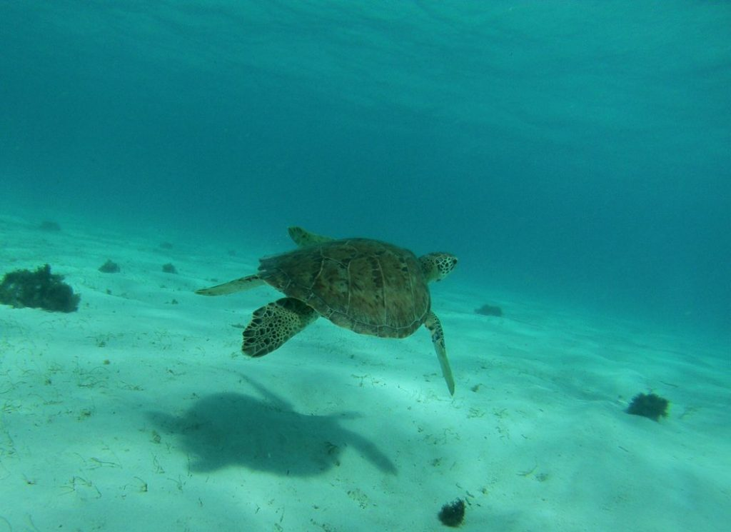 Wildlife Tourism: Sea Turtles in the Caribbean