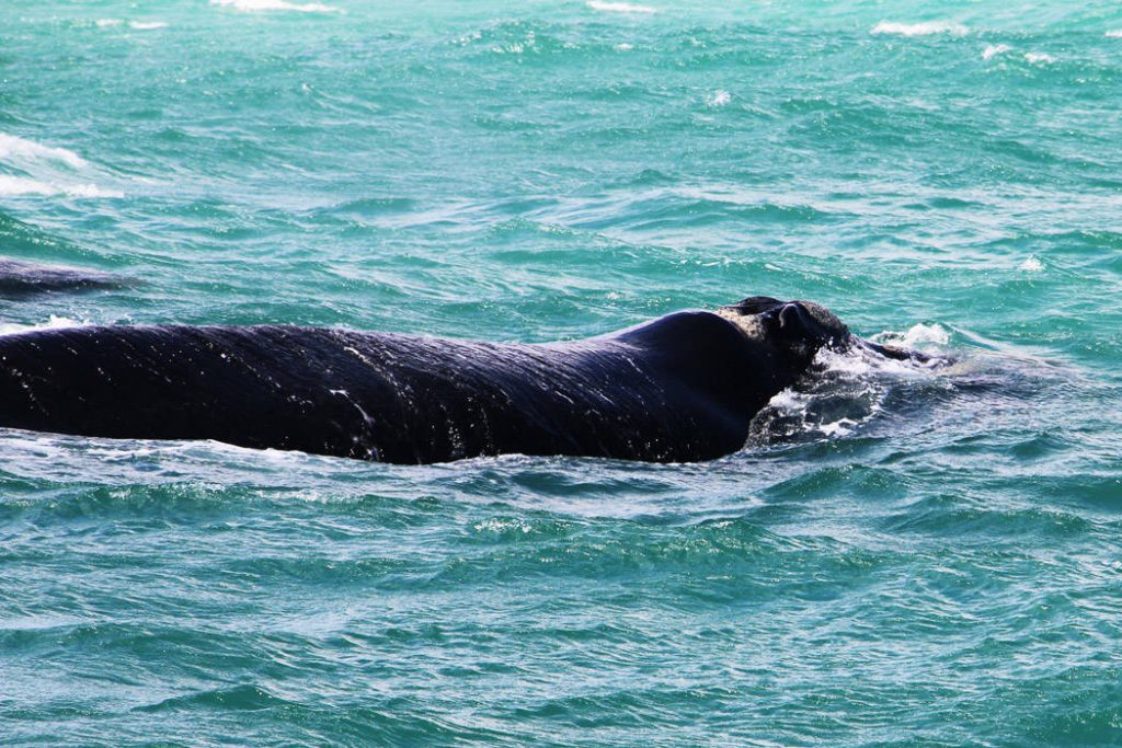 Whale Wildlife Adventure - South Africa