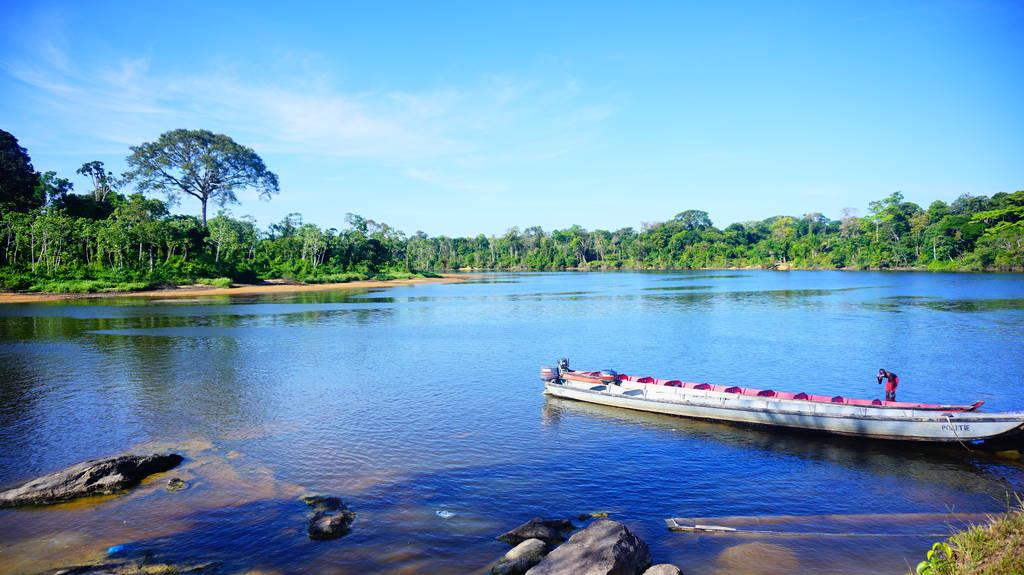 Wildlife Encounters in Suriname