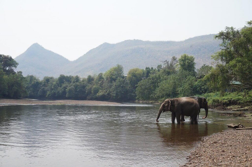 Where to see the best wildlife elephant sanctuary