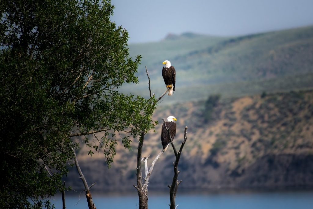 Things to Do in the United States - Bald Eagles