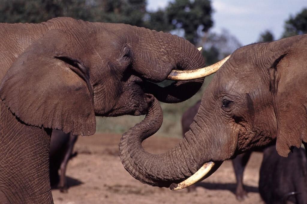 Two elephants, wildlife adventures in Africa