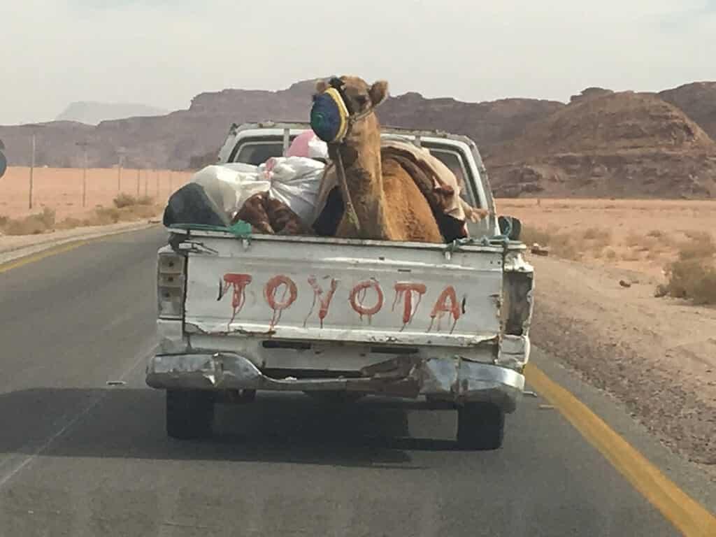 Camel in a Toyoya