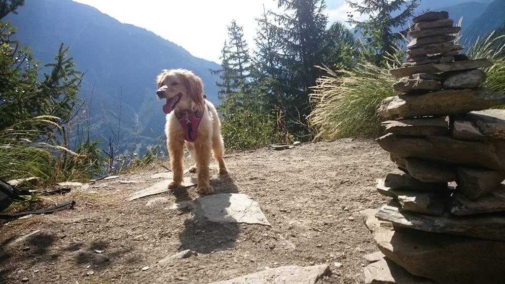 a traveling dog