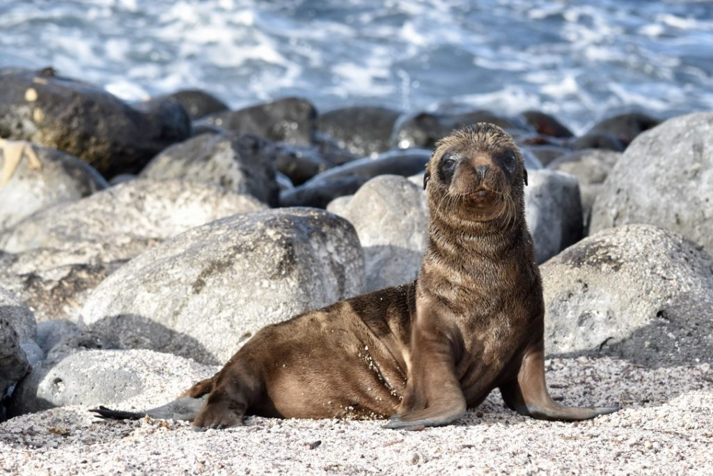Galapagos Islands is a great multi day tour option
