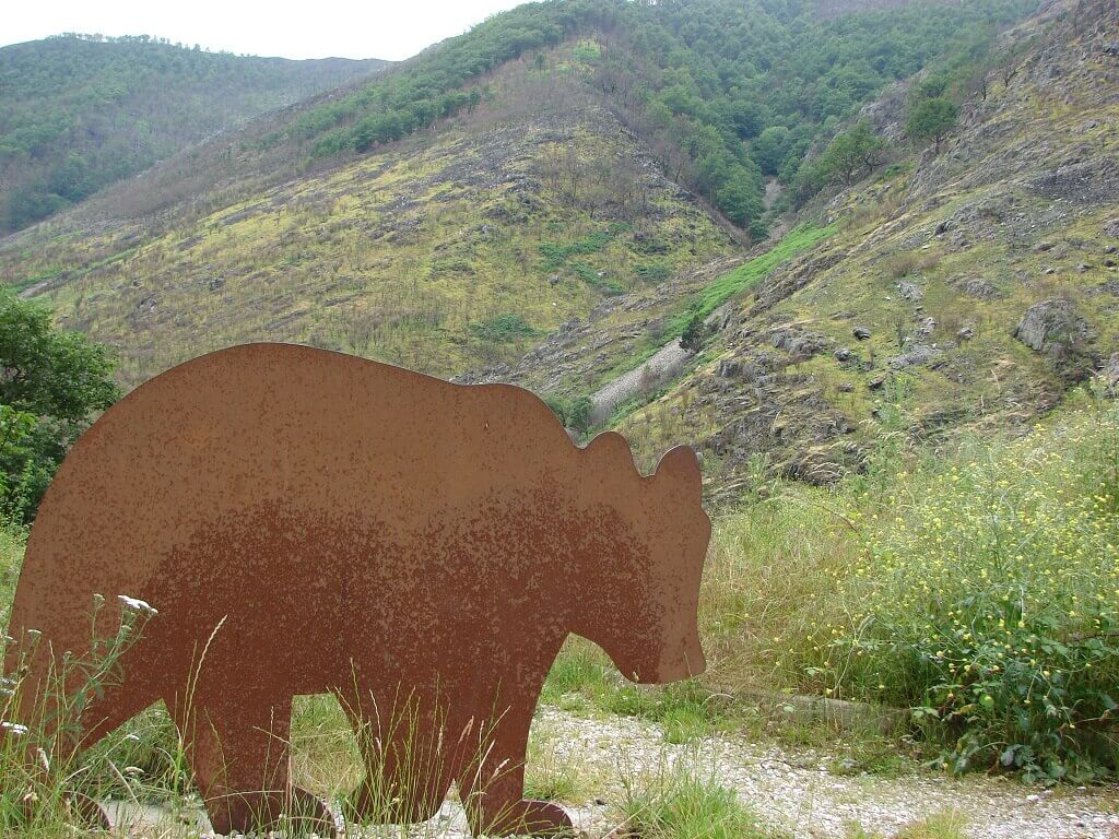 Brown bears in Asturias, why I fell in love with Asturias