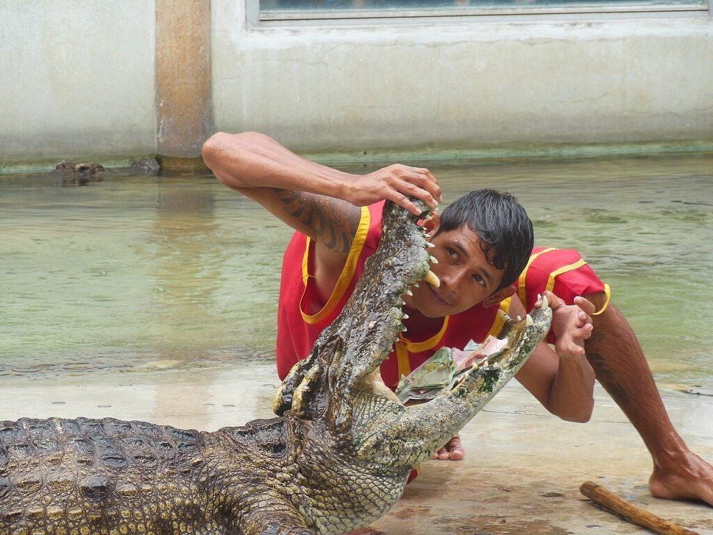 safety travel dos and don'ts, a man putting his head into an aligator's mouth