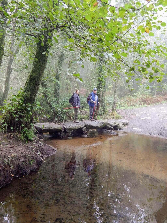 El Camino woods