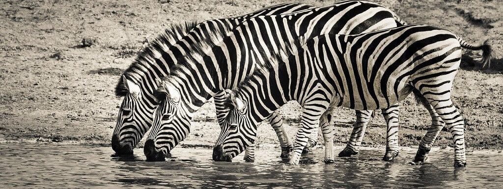 Overcome travel obstacles and see zebras in Africa