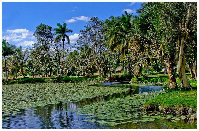 Zapata swamp near Havana