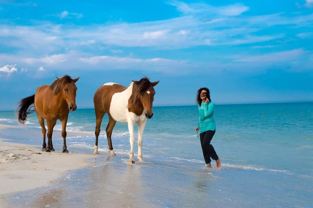 Horses on Assateague Island an off the neaten track travel destination in the U.S.