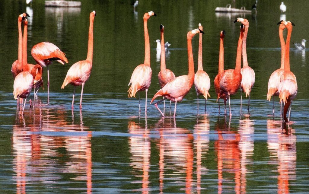 Flamingos in Alejandro de Humboldt National Park, a Cuba UNESCO World Heritage site