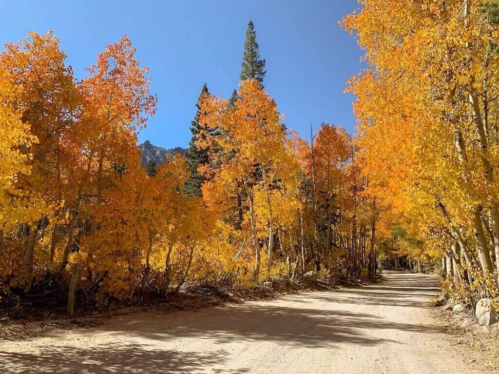 Autumn colors in California