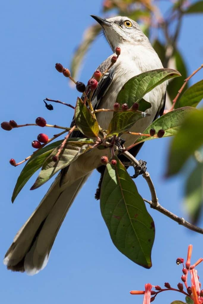 Cuban native bird