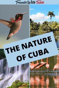Nature scenes of Cuba