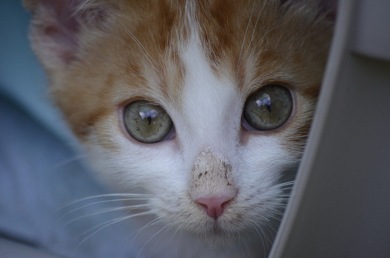 A cat face seen when volunteering with animals abroad