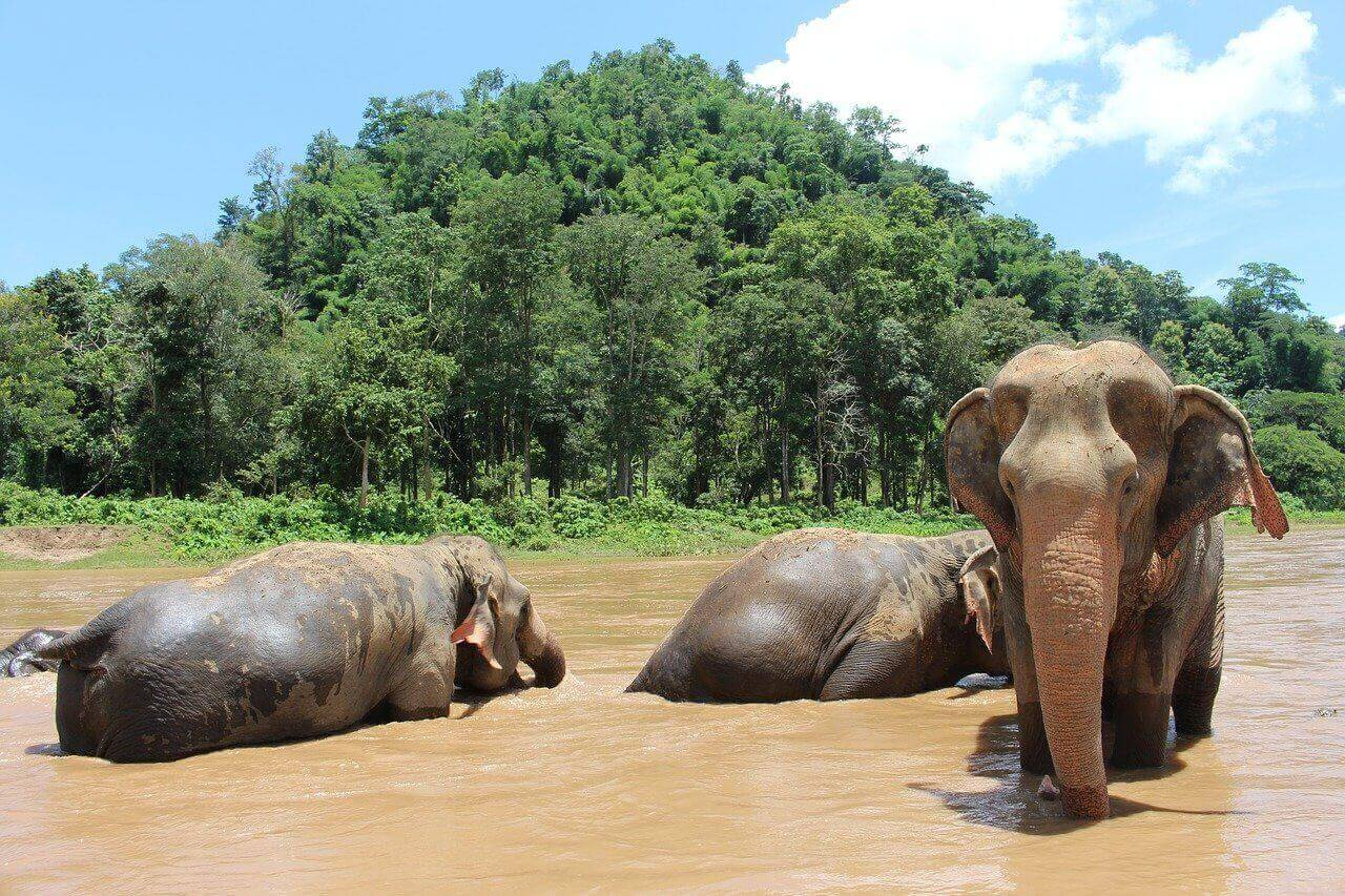 Volunteering with animals abroad at an elephant sanctuary