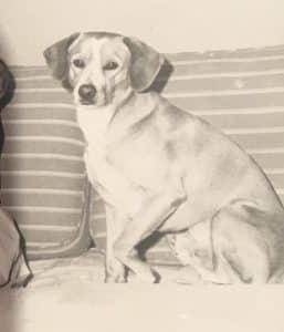 Rocky, the dog