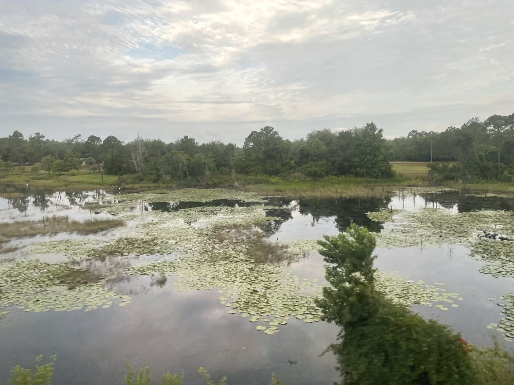 The marshes of Georgia as seen from the Amtrak auto train